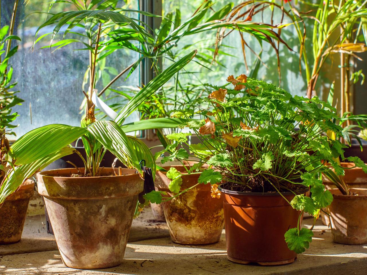Des plantes pour dépolluer son air intérieur