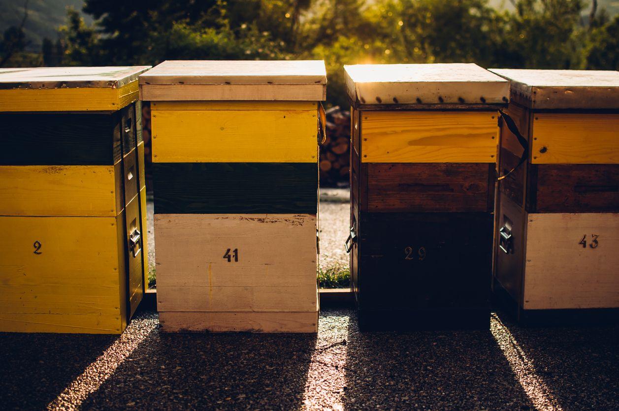 ruches urbaines les abeilles prolif rent dans les villes cr dit agricole. Black Bedroom Furniture Sets. Home Design Ideas