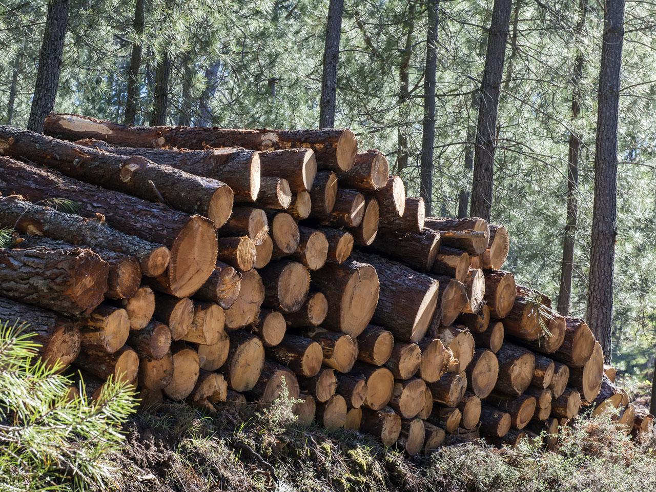 Le prix des terrains forestiers en hausse